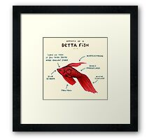 Anatomy of a Betta Fish Framed Print