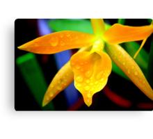 Yellow Pontinara Orchid (Cherub; Spring Daffodil) Canvas Print