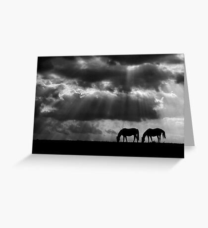 Evening Rays Greeting Card