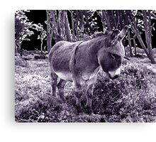 little donkey ... little donkey ... there's a star ahead! Canvas Print