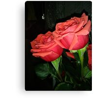 Roses 6 Canvas Print