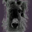 Little Donkey by SNAPPYDAVE