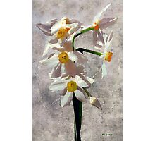 Spring on a Stalk Photographic Print