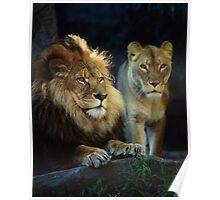 Lions (Jambo and Kuchani) Poster