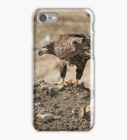 Juvenile Bald Eagle Feeding iPhone Case/Skin