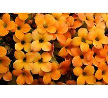 Flowers Like Marmalade Photographic Print