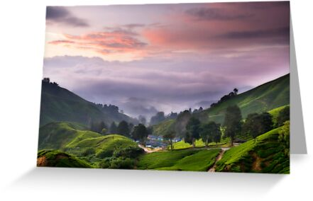 Morning @ The Tea Farm by Steven  Siow