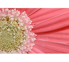Pinky Closeup Photographic Print