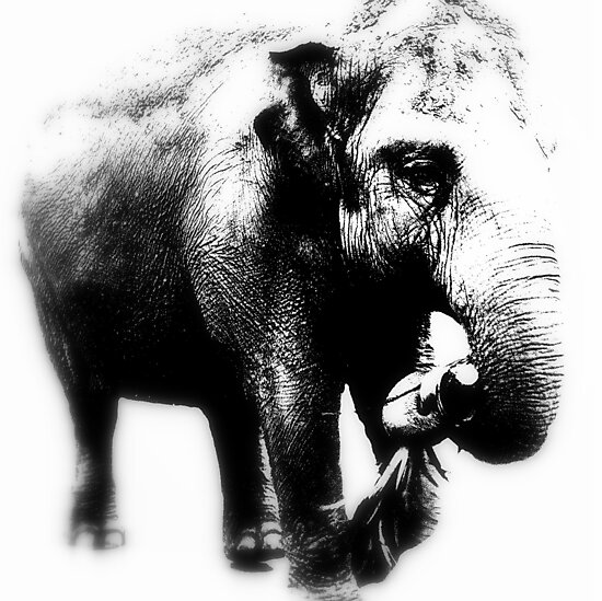 Elephant Walk by Deanna Roberts Think in Pictures