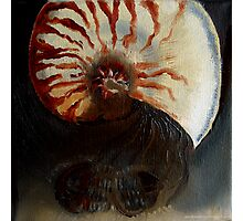 Ammonite Vs. Trilobite Photographic Print