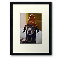 Grumpy Scooby..... Framed Print