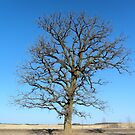 The Simplicity of Nature - Tree by Barberelli