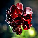 Dark Flower by Jessica Millman