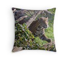 Pacing Jaguar Throw Pillow