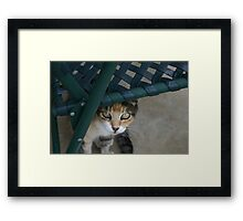 Miss Kit Kat Framed Print