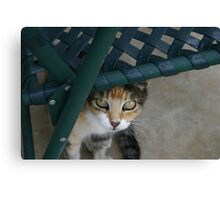 Miss Kit Kat Canvas Print