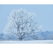 One Frosted Tree Photographic Print