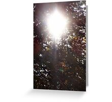 Autumn Sun Rays #17 Greeting Card