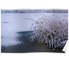 Snow Reeds Poster