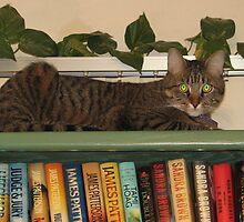Monkey on Bookcase by PhotosbyNan