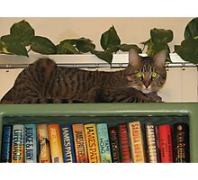 Monkey on Bookcase Photographic Print