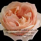 That which we call a rose by Luci Mahon