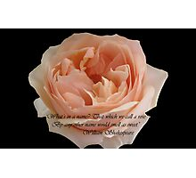 That which we call a rose Photographic Print