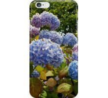 Blue Hydrangeas iPhone Case/Skin