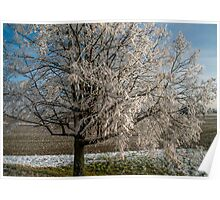 Winter Scene - Frosted Tree Poster