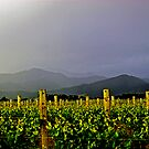 Storm over the  Richmond Ranges by Robyn Carter