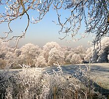 A frosty day in Abbey Fields, Kenilworth, UK. No. 1. by John Evans