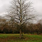 Tree in Hyde Park by Tarryn Godfrey