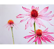Pink and White Photographic Print