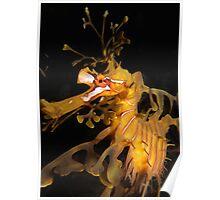 Leafy Seadragon Face. Poster