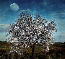 Almond moon by paulgrand