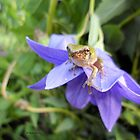 Tree Frog on Purple Flower by Barberelli