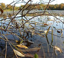 Frog at Home in Swamp with Autumn Landscape by Barberelli