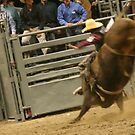 bull rider #2 by aasp