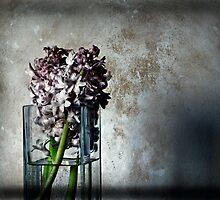 Hyacinths  by scarlet james