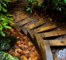 Stairs in the Woods by Marcus Taylor