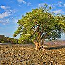 THE TREE IN THE OCEAN  by HanselASolera
