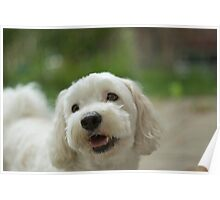 Odie smile Poster