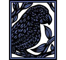 Carlill Parrot Blue White Photographic Print