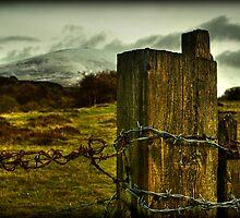 rust by Jordan Whipps
