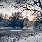 Winter Pond by Nigel Bangert