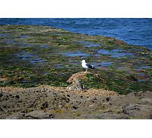 Only One ~ Sunset Cliffs, California Photographic Print