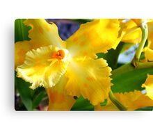 Yellow Orchid (cattleya) Canvas Print