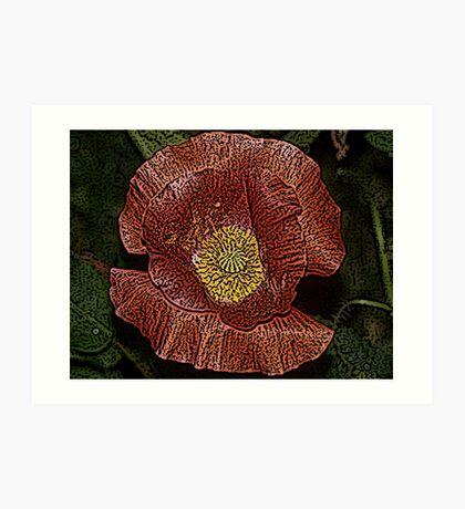 Engraved Poppy Flower Art Print