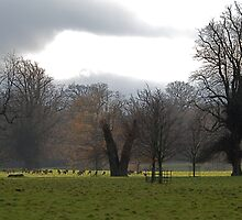 Studley Royal again by dougie1