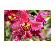 Magenta & Yellow Orchid Art Print